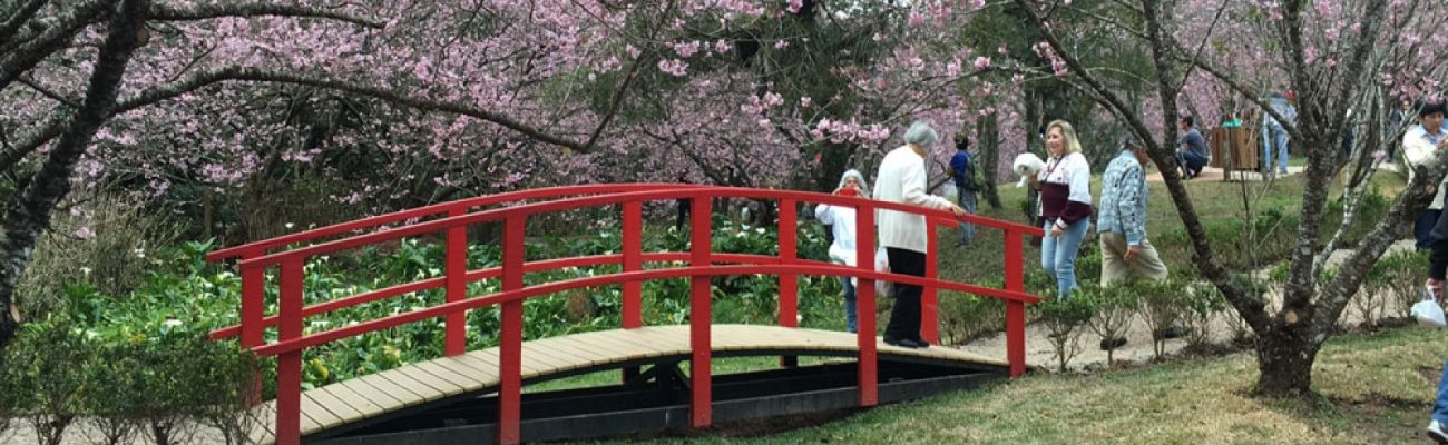 Parque da Cerejeira
